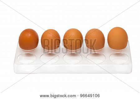 5 Chicken Eggs In Egg Tray