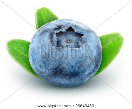 Fresh blueberry with green leaves. Isolated on white background