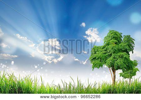 Green Grass Tree and bokeh light sun and cloud sky