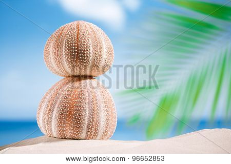sea urchins - nice and colorful  on white sand beach, ocean,  sky and seascape