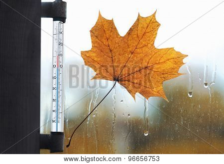 Meteorology, Forecasting And Autumn Weather Season Concept - Thermometer And Yellow Maple Leaf Stuck