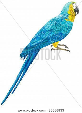 The illustration of blue and yellow macaw