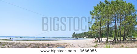 Sanguinet Lake With Big Pines Along The Beach In The Landes, South West France, Panorama