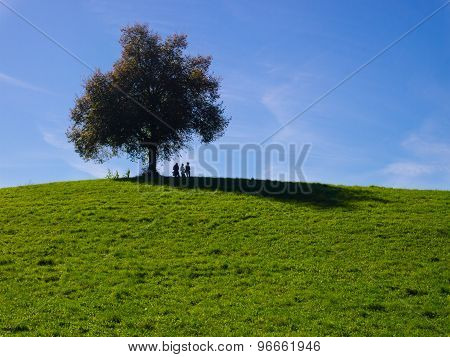 A lone tree on top of a grass hill with blue sky