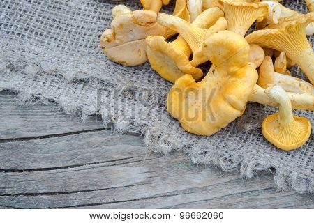 Cantharellus Cibarius, Commonly Known As The Chanterelle, Golden Chanterelle Or Girolle, Is A Fungus