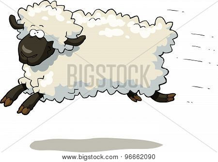 Galloping Sheep