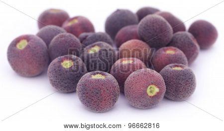 Grewia Asiatica Or Falsa Fruits Of Southeast Asia