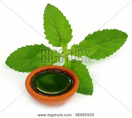 Medicinal Holy Basil Or Tulsi Leaves With Extract
