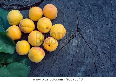 Orange Apricot On A Cracked Stump
