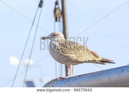 Seagull Standing On A Mast In The Harbor.