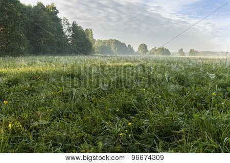 Morning On Meadows