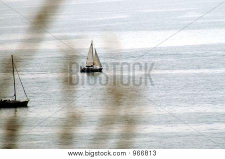 Sailer