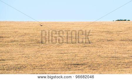 Sardinia Country Wild
