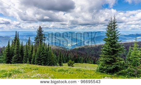 High Alpine Meadows & Pine Beetle
