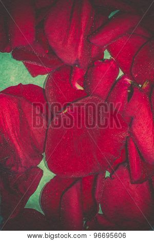 Red Rose Petals Retro