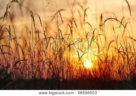 View of the sunset through the grass