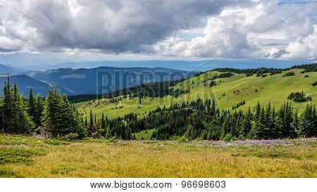 Alpine Meadows In Shuswap Highlands