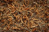 stock photo of dry grass  - Forest cover with fallen brown leaf on dried grass - JPG