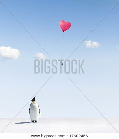 Penguin looking at a heart shaped balloon with a postcard