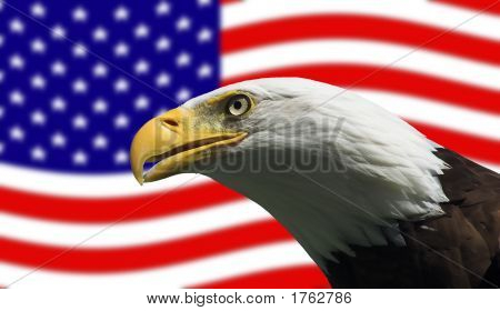 Bald Eagle Gurading The American Flag