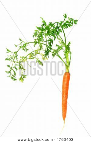 Baby Carrot