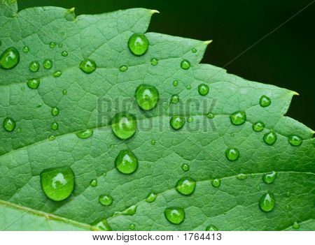 Droplets On Leaf - Shallow Focus
