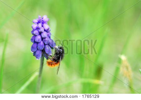 Abeja en flor de color púrpura