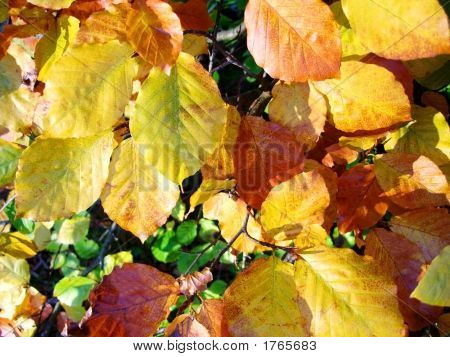 Autumn Leaves In The Fall