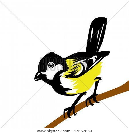 drawing tomtit on white background