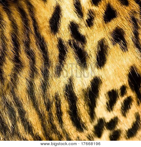 leopard leather texture