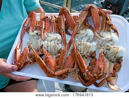Fresh Cooked Seafood. Blue Swimmer Crabs on a tray ready for eating.