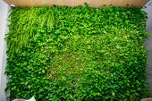 Green Wall Of Different Deciduous Plants In The Interior Decoration. Beautiful Vivid Green Leaf Wall poster