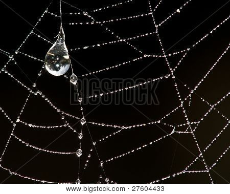Beautiful pearl necklace made of drops of dew on the spider web. Macro photo
