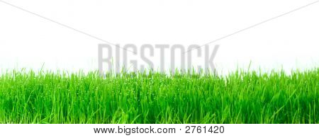 Fresh Green Gras