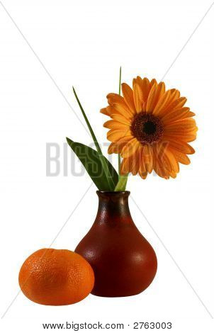 Floral Composition With Gerber And Tangerine