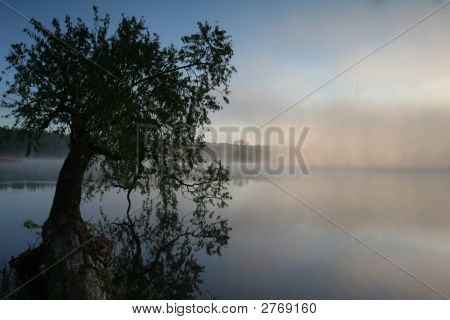 Single Tree In The Water