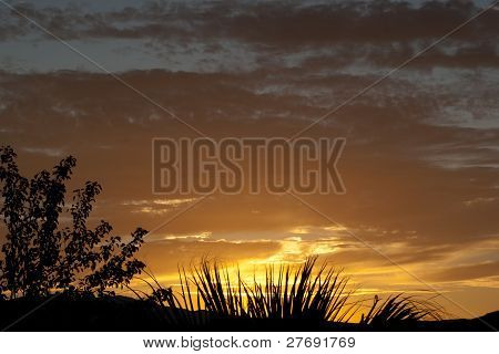 Orange Sunset With Plant Silhouettes