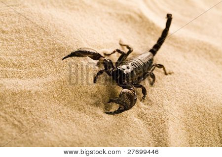 Scorpion on the sand