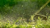 The Gardener Mows Weeds. Small Parts Of Vegetation Scatter In Different Directions poster