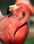 This Is A Wildlife Bird Photograph From The Everglades In Florida, Usa. poster