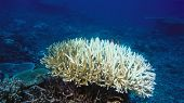 Dead Coral Reef Killed By Global Warming And Climate Change poster