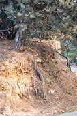 Roots In Soil Soil Profile Soil Zones Trees Growing On Soil Cut Section Of Soil. Trees Growing Over  poster