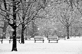 stock photo of blanket snow  - a gentle winter snow falls on a peaceful park creating a beautiful and calm seasonal black and white scene - JPG