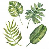 Set Of Exotic Tropical Palm Leaves - Monstera, Banana And Areca, Colored Pencil Drawing, Raster Illu poster