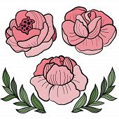 Roses Flower Illustration. Hand Drawn Set With Flowers And Leaves On White.  Vector Botany Floral De poster