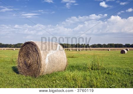 Hay Bales Shrink Wrapped