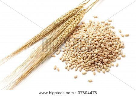 Barley With Grains