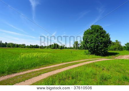 Country Road In Green Field And Trees