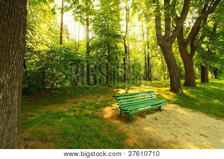 Bench In Morning Park