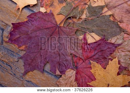 leaves on a stone wall